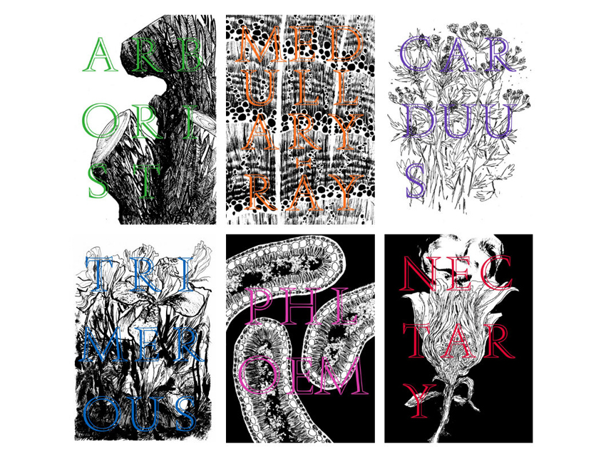 Progressive Botany Vol. I - Illustrations by