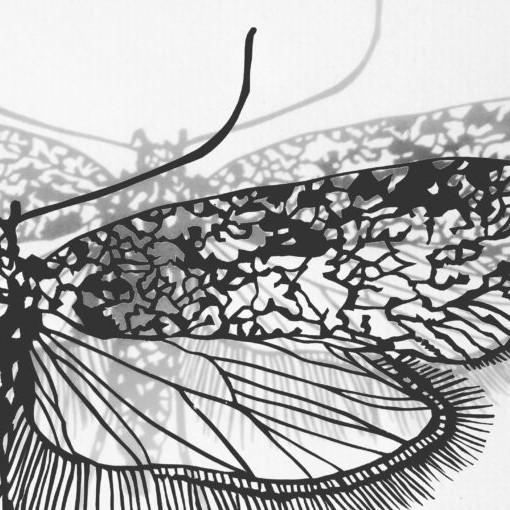 Stevi Benson: Fragile Nature